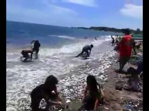 Aneh !! Ikan-Ikan Berserakan Di Pantai Muncar-Banyuangi