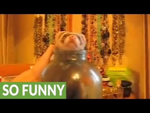 Pet ferret plays in jar of sugar