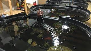 My Indoor Goldfish Ponds