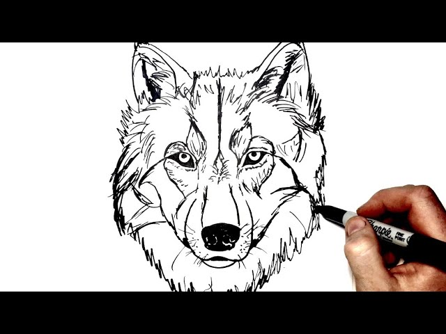 Easy Simple Wolf Drawing