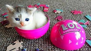 Котята в ПРЯМОМ ЗЕФИРЕ! Играем с котятами! Маленький котенок Зефир всё время убегает от Алис !