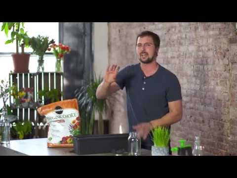 Growing Wheat Grass Indoors for Juicing with Dan Faires
