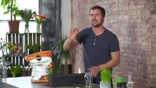 How to Grow Wheatgrass Indoors for Juicing