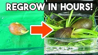 This Machine Regrows Any Fruit or Veg in Hours!