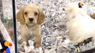 Pet Stores CAUGHT Lying About Puppy Mill Dogs | The Dodo
