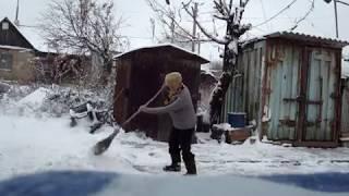 Приучаю серпастых голубей к первому снегу.20.11.18.