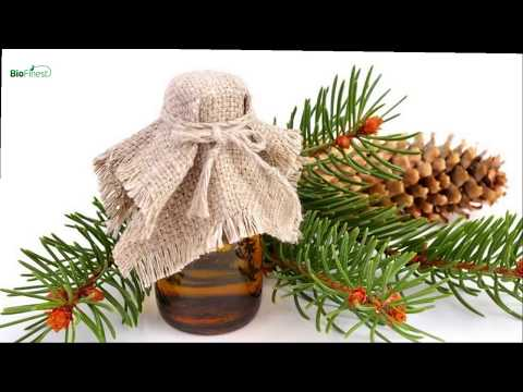 7-surprising-benefits-and-uses-of-fir-needle-essential-oil-that-you-might-not-know-about
