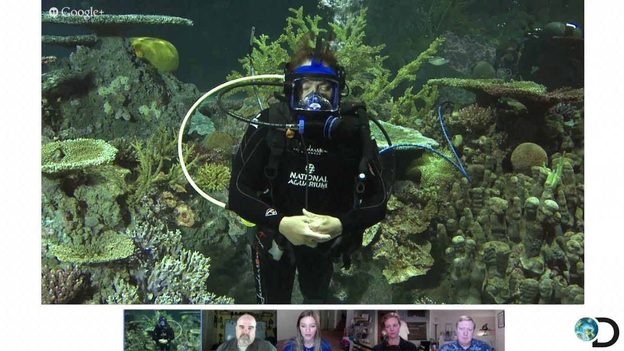 Shark Week 2013 Google Hangout