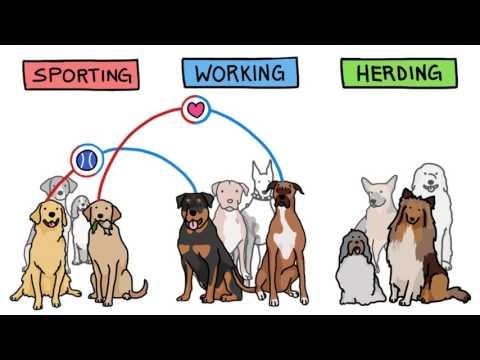 Связан ли характер собак с породой? [MinuteEarth]