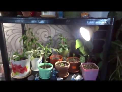 Комнатные цветы/растения. Подсветка для цветов дома. Как и где крепятся лампы.