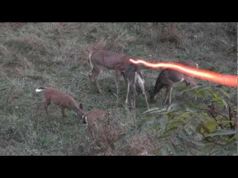 BOWHUNTING: Double Deer Morning!!!