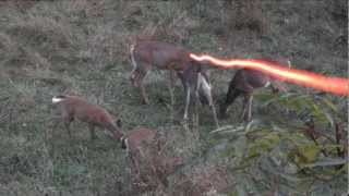 BOWHUNTING: Double Deer Morning!!! thumbnail