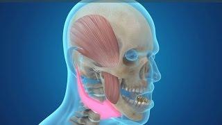 턱관절 치료, 구조와 기능을 한 번에