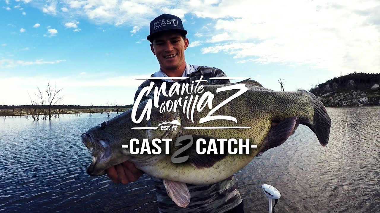 what do murray cod eat