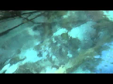 Симиланские острова Пхукет Симиланы цены отзывы