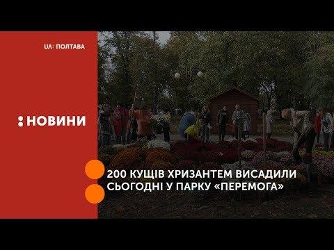 UA: Полтава: 200 кущів хризантем висадили сьогодні у парку «Перемога»