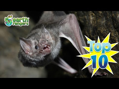 Top Ten Reasons to Love Bats