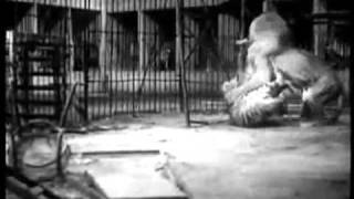 Tiger vs Lion, Big Cage Fight from 1933, uncut Version