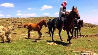 Salihê Şirnexî - Hoy hoy Memo (Orjinal)