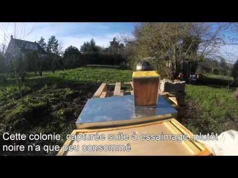 controle ruches et provisions 25 janvier 2016