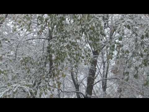 [10 Hours] Snowy Forest #2 Video & Audio Winter Birds [1080HD] SlowTV