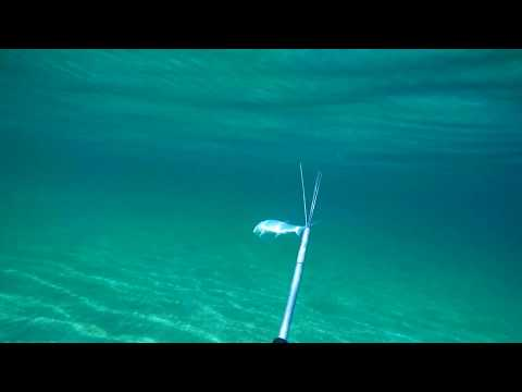 Mullet Spearfishing - Pole Spear In The Mediterranean