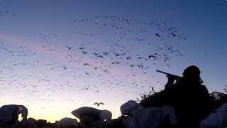 Hired to Hunt Season 4 #12: Slam Bam Thank You Ma'am. Goose & Ducking Hunting. Limit Hunts Alberta.