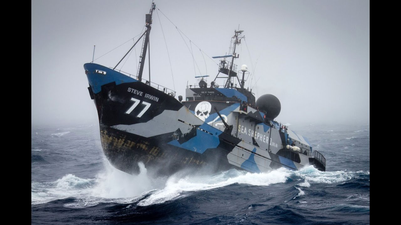Guardians of marine wildlife | Sea Shepherd Conservation ...