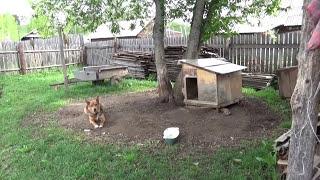 Дом, где я живу // Жизнь в деревне(Представляю вашему вниманию домик в деревне, в котором мы живем., 2015-05-18T08:12:17.000Z)