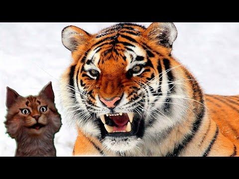 Наука для детей Животные | Тигр | Хищные животные