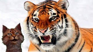 видео Тигры подводных джунглей