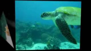 Sea Explorers Island Hopping mit Tauchsport Gläßer