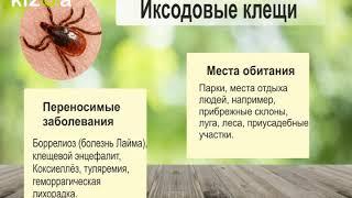 Виды клещей в Одесской области. Что делать, если укусил клещ?(, 2017-12-08T13:17:54.000Z)