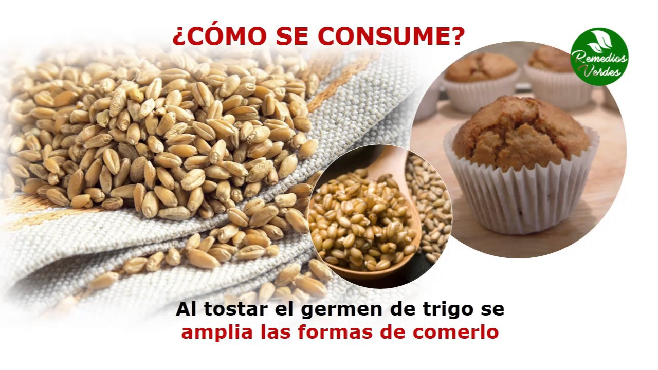Como se toma el germen de trigo para adelgazar