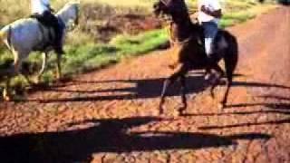 Cavalo PSI Ramilândia PR