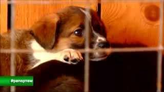#приют для животных