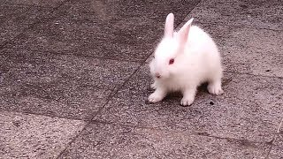 Cute Bunny Rabbit Videos | Who Else Wants To Enjoy RABBIT VIDEOS | Rabbit Videos For Baby