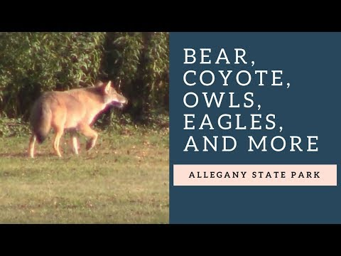 Awesome WILDLIFE in Allegany State Park!
