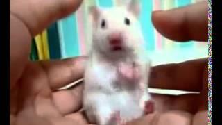 Очень короткое видео, Но зато очень смешное Смотрите!!!