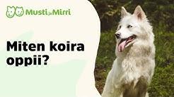 Miten koira oppii?