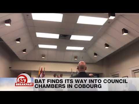 Bat Interrupts Cobourg Council Meeting