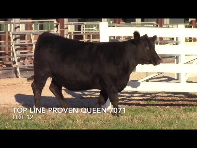 Top Line Farm Lot 12