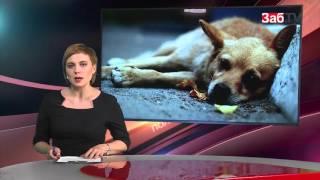 Время Ч: отрава для собак, последний урожай наркомана и спасение утопающих
