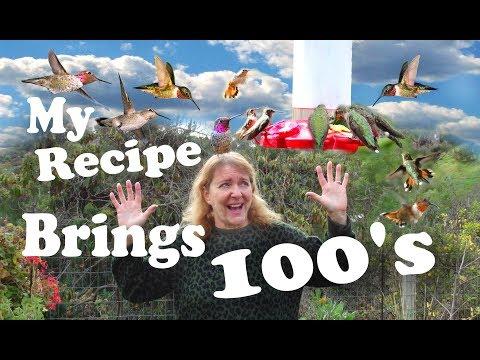 FAST EASY Hummingbird Recipe Nectar feeding Hundreds of Birds