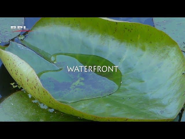 Waterfront - Natuur in de omgeving - RPL TV Woerden 16 juli 2018
