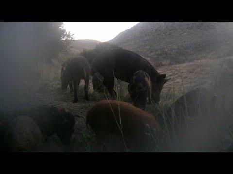 Carrizo Plains Hunt