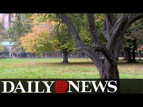 The Haunting of Van Cortlandt Park
