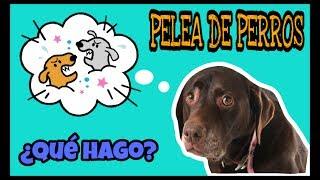PELEA DE PERROS | ¿QUÉ HAGO?