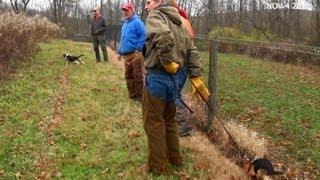 Skyview's Beagles Belmont Jefferson Gun Dog Brace Trial Nov 4 2012