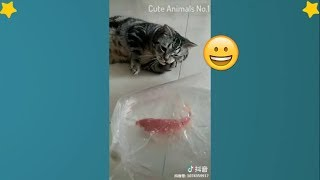 Funny Pets & Animals Of The Week - Funny Pet Videos Compilation  #1